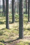 Sommarskogträd gröna wood solljusbakgrunder för natur - VI Arkivfoto