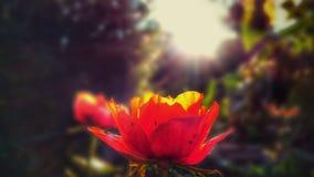 Sommarslut Fotografering för Bildbyråer