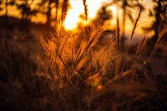 Sommarsolnedgångäng Arkivbild