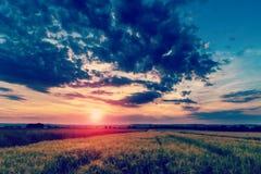 Sommarsolnedgång över ett fält Royaltyfria Bilder