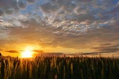 Sommarsolnedgång över ett fält Royaltyfri Fotografi