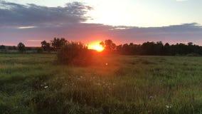 Sommarsolnedgång i fältet arkivfilmer