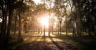 sommarsolnedgång och rött stengolv i skogen, Thailand Royaltyfria Foton