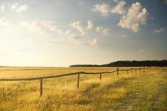 Sommarsolnedgång på fältet Arkivbilder