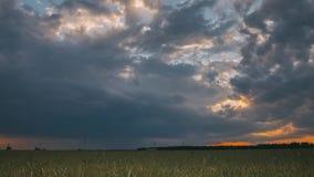 Sommarsolnedgångafton ovanför för vetefält för bygd lantligt landskap Scenisk dramatisk himmel med regnmoln på horisont lager videofilmer