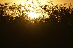 Sommarsolnedgångavbrotten till och med buskarna och gräset royaltyfria foton