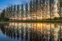 Sommarsolnedgången som en svan paddlar i ett damm Arkivfoton