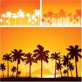 Sommarsolnedgångbakgrund med palmträd Arkivbild