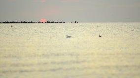 Sommarsoluppgång vid havskusterna arkivfilmer
