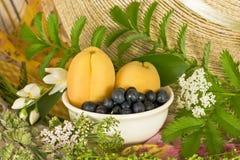 Sommarstilleben med aprikors och blåbär Arkivbild