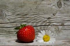 Sommarsymboler - jordgubbe- och tusenskönablomma Arkivbild