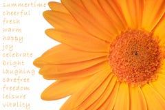 sommartid Royaltyfria Bilder