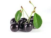 sommartid för svart Cherry Fotografering för Bildbyråer