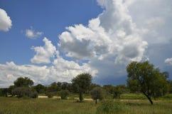 Sommartid i Namibia Arkivbild