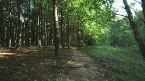 Sommartid i skogen stock video