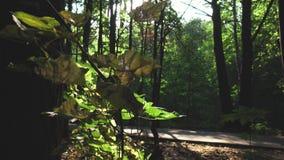 Sommartid i skogen lager videofilmer