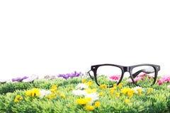 Sommartid på en härlig blommaäng! Arkivfoton