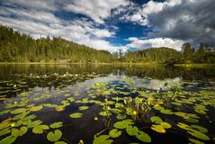 Sommartidvegetation på den lilla bergsjön nära Jervskogen, Jonsvatnet område i mellersta Norge royaltyfri foto