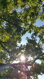 Sommarträd Arkivfoton