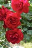 Sommarträdgård Royaltyfri Foto
