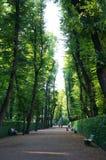Sommarträdgård av St Petersburg Royaltyfria Bilder
