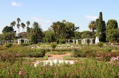 Sommarträdgård av ro. Staden landskap. Royaltyfri Foto