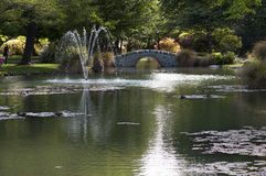 Sommarträdgården är Queenstown. Arkivbilder