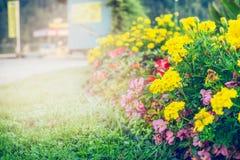 Sommarträdgården eller parkerar att landskap med härlig blommasäng arkivfoton