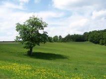 sommartree Arkivfoto