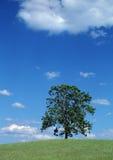 sommartree Fotografering för Bildbyråer