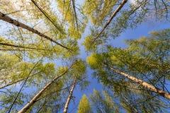 SommarTrees royaltyfria bilder