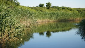 SommarUkraina Dnepr flod Royaltyfri Fotografi