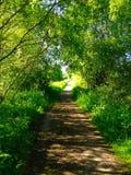 Sommarväg Arkivfoto