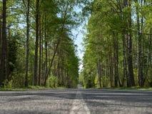Sommarväg fotografering för bildbyråer