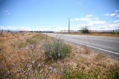 Sommarvägrenplats i norr Canterbury Arkivfoto
