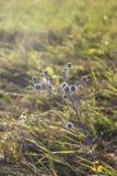 Sommarväxter Royaltyfri Bild