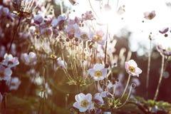 Sommarväxter Arkivfoton