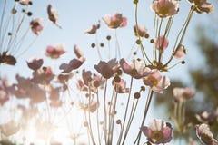 Sommarväxter Arkivbilder