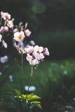 Sommarväxter Royaltyfria Foton