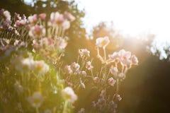 Sommarväxter Fotografering för Bildbyråer
