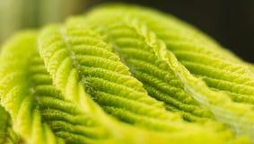 Sommarvårfilial med nya gröna sidor En nyckelpiganärbild på en filial av nya gröna sidor Makro härligt Fotografering för Bildbyråer