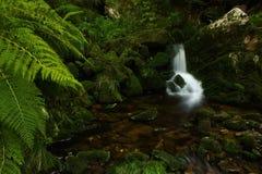 sommarvattenfall Fotografering för Bildbyråer