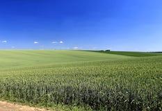 Sommarvetefält Fotografering för Bildbyråer