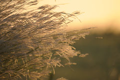 Sommarviktig Fotografering för Bildbyråer