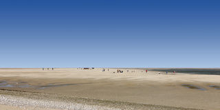 Somme bay, France. Looking for seals, Somme bay, France royalty free stock image
