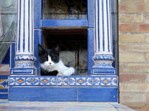 Somme de chat à Séville image libre de droits