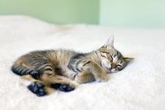 Somme de Kitty Image libre de droits