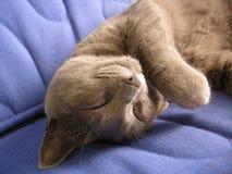 Sommeil étonnant de chat Images libres de droits