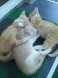 sommeil Image libre de droits