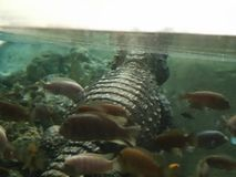 Sommeil avec les poissons images libres de droits